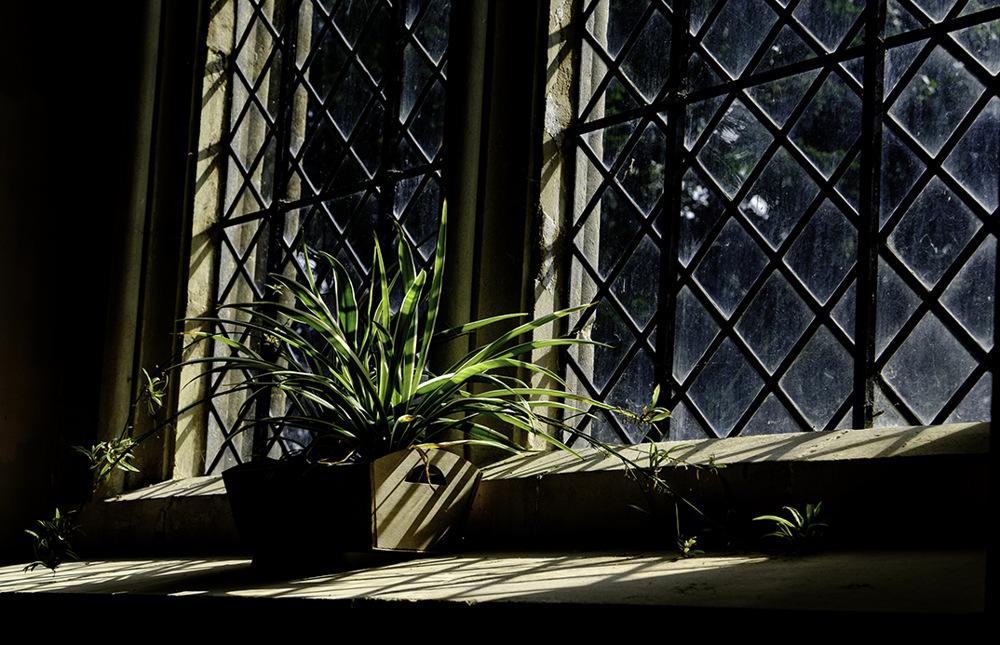 photoblog image Window Light.